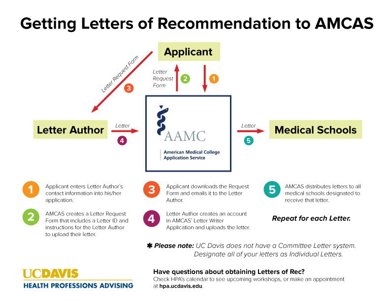 Medical School Letter Of Recommendation Timeline