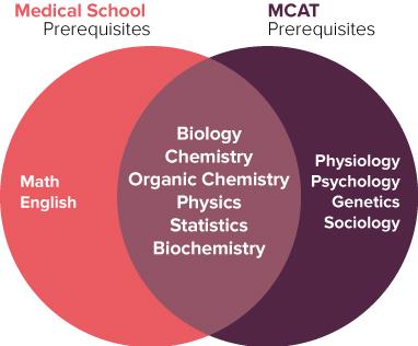 Medicine (MD/DO/DPM) | hpa
